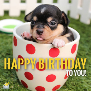 Top happy birthday dog images for animal lovers