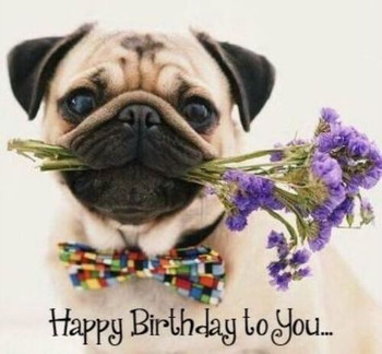 Happy birthday pics hd download funny quotes images for h...