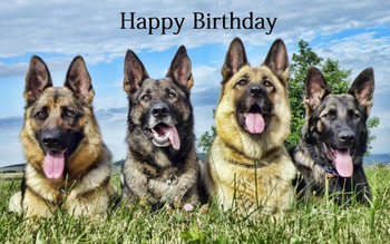 Birthday wishes with german shepherd