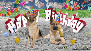Happy birthday german shepherd youtube