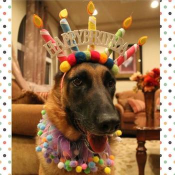 Two german shepherd with birthday greetings dogs postcard - Happy