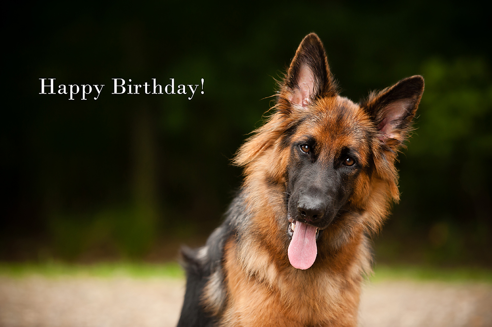 Happy birthday images with German shepherd💐 - Free bday