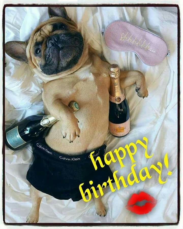 Happy birthday images with French bulldog💐 - Free bday