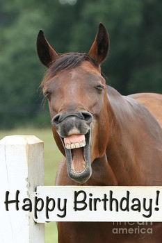 Happy birthday smiling horse photograph by jt photodesign