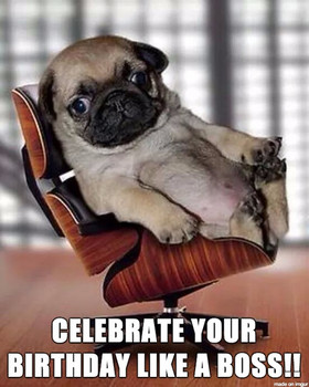 Birthday pug meme pug best of the funny meme