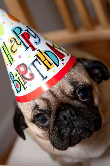 Happy birthday sister pug meme google search pugs pinterest - Happy