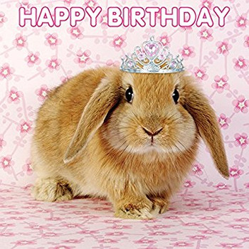 The d collection birthday card happy birthday bunny amazo...