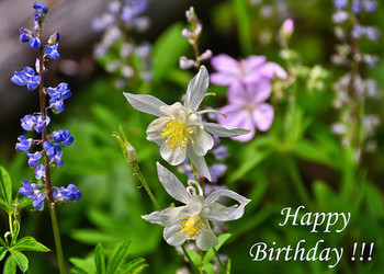Wildflowers birthday greeting card photograph by greg nor...