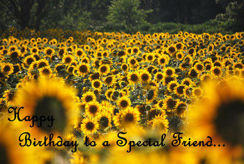 Happy birthday special friend sunflowers greeting card by