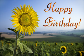 Birthday sunflower free flowers ecards greeting cards