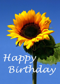 Sun flower happy birthday greeting card moggies and more