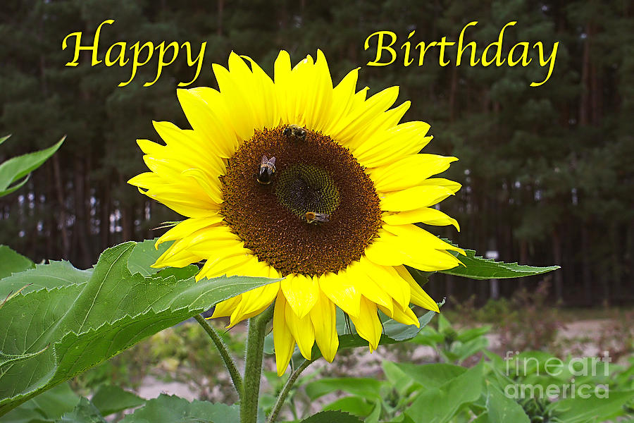 Happy birthday greeting card sunflower photograph by sasc...